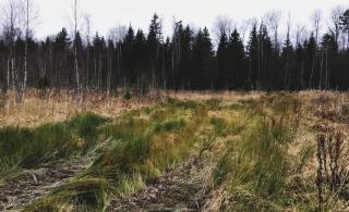 Nikola-Lenivets Winter Wild Trail