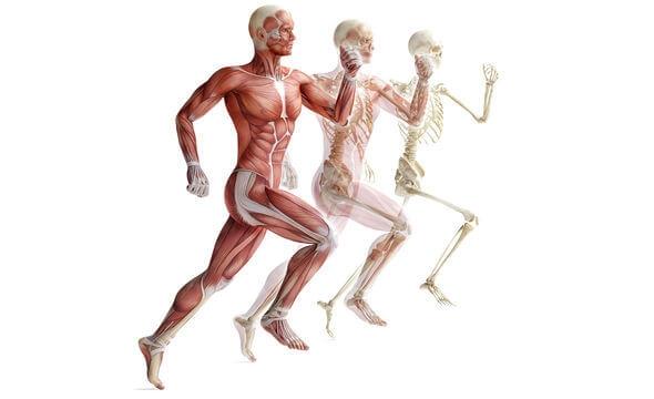 Мышцы, которые работают во время бега